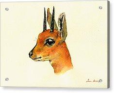 Steenbok Acrylic Print by Juan  Bosco