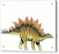 Stegosaurus Acrylic Print by Michael Vigliotti