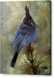 Stellar Of A Bird Acrylic Print by Mary St Peter