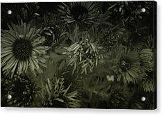 Stellarators Acrylic Print by Marcus Hammerschmitt