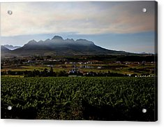Stellenbosch Vineyard Acrylic Print by Dale Halbur