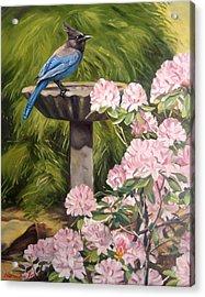 Steller Jay Acrylic Print by Norman Kelly