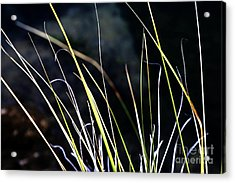 Stems Acrylic Print