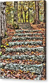 Acrylic Print featuring the photograph Step Into The Woods by Debbie Stahre