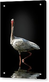 Stepping Out Acrylic Print by Cyndy Doty