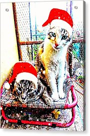 Stevie Mouse And Emmy Waiting For Christmas Acrylic Print