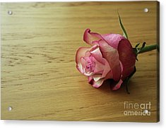 Still Life, Macro Photo Of Pink Rose Flower Acrylic Print by Pixelshoot Photography