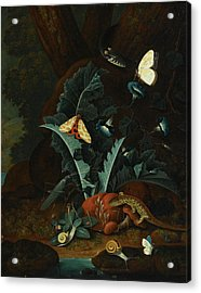 Still Life With Snails Acrylic Print by Johann Falch