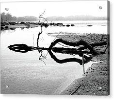 Stillness Acrylic Print by Karen Stahlros