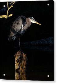 Stillness On The Hunt Acrylic Print