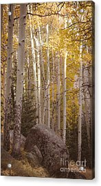 Acrylic Print featuring the photograph Stillness by The Forests Edge Photography - Diane Sandoval