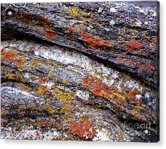 Stone And Lichen Acrylic Print