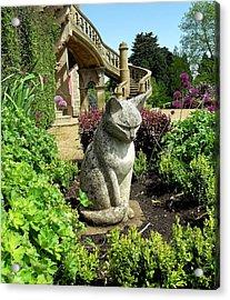Stone Cat Acrylic Print by Patrick J Murphy