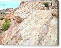 Acrylic Print featuring the photograph Stone Feet In Valley Of Fire by Ray Mathis