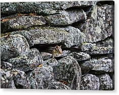 Stone Wall Chipmunk Acrylic Print
