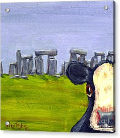 Stonehenge Cow Acrylic Print by Terry Taylor