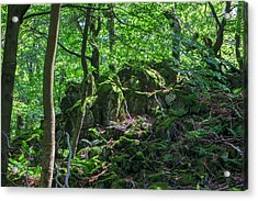 Stones In A Forest In Vogelsberg Acrylic Print