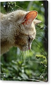 Stop And Smell The Flowers 9433a Acrylic Print