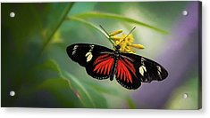 Butterfly, Stop And Smell The Flowers Acrylic Print