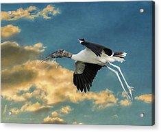 Stork Bringing Nesting Material Acrylic Print