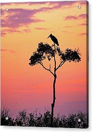 Stork On Acacia Tree In Africa At Sunrise Acrylic Print