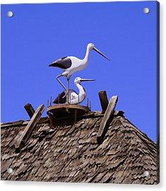 Storks In Solvang Acrylic Print