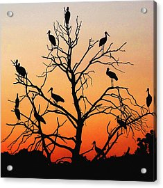 Storks In The Evening Sun Light Acrylic Print