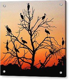 Storks In The Evening Sun Light Acrylic Print