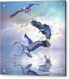 Storks Landing Acrylic Print