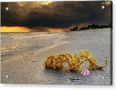 Storm And Sea Shell On Sanibel Acrylic Print by Greg Mimbs