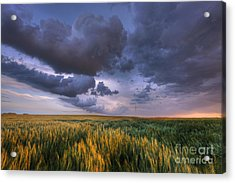Storm Clouds Over Barley Acrylic Print