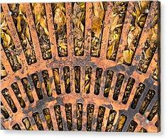 Storm Drain Acrylic Print by Jim Hughes