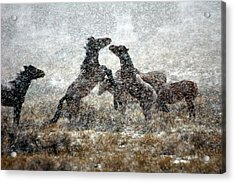 Storm Fight Acrylic Print by Gene Praag