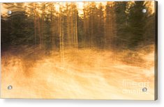 Storm In The Forest Acrylic Print