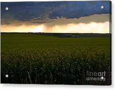 Storm Over The Canola Fields Acrylic Print