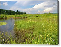 Storm Over The Swamp Acrylic Print