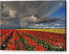 Storm Tulips Acrylic Print
