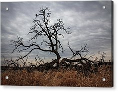 Storms Make Trees Take Deeper Roots  Acrylic Print