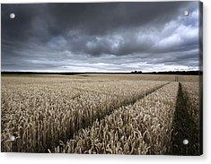 Stormy Cornfields Acrylic Print