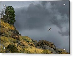 Acrylic Print featuring the photograph Stormy Flight by Frank Wilson