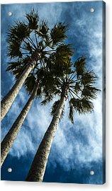 Stormy Palms 1 Acrylic Print
