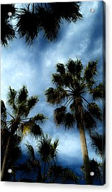 Stormy Palms 2 Acrylic Print