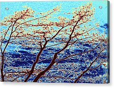 Stormy Weather Acrylic Print by Will Borden