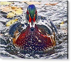 Straight Ahead Wood Duck Acrylic Print by Jean Noren