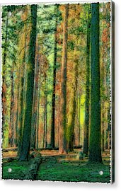 Straight And Tall Acrylic Print