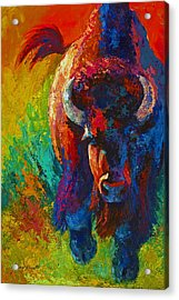 Straight Forward Introduction - Bison Acrylic Print