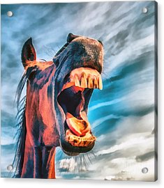 Straight From The Horses Mouth Acrylic Print by Edward Fielding