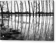 Stranded Trees II Acrylic Print by Hazy Apple