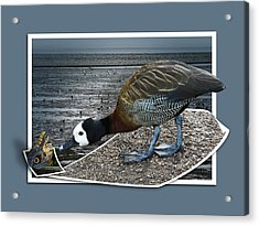 Acrylic Print featuring the photograph Strange Encounter by Jane McIlroy