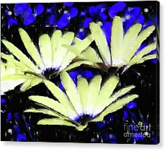 Strange Marigold Acrylic Print